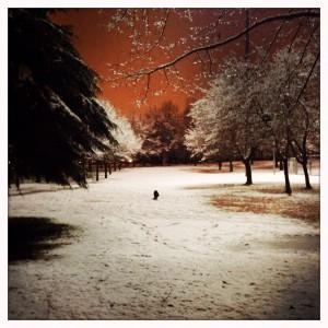 Winterreise#1